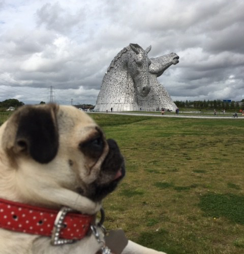 Millie Puggly at Kelpies