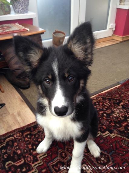 She eventually grew into her ears